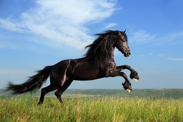 Imparare dai cavalli
